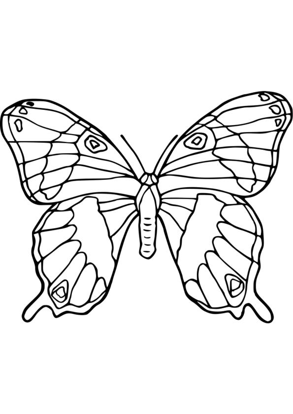 dessin technique nature des traits