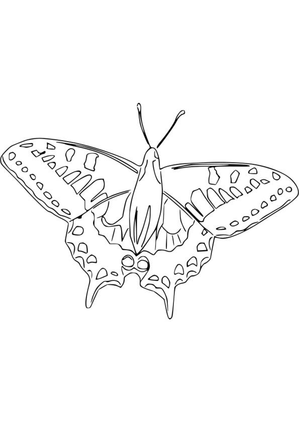 dessin theme nature