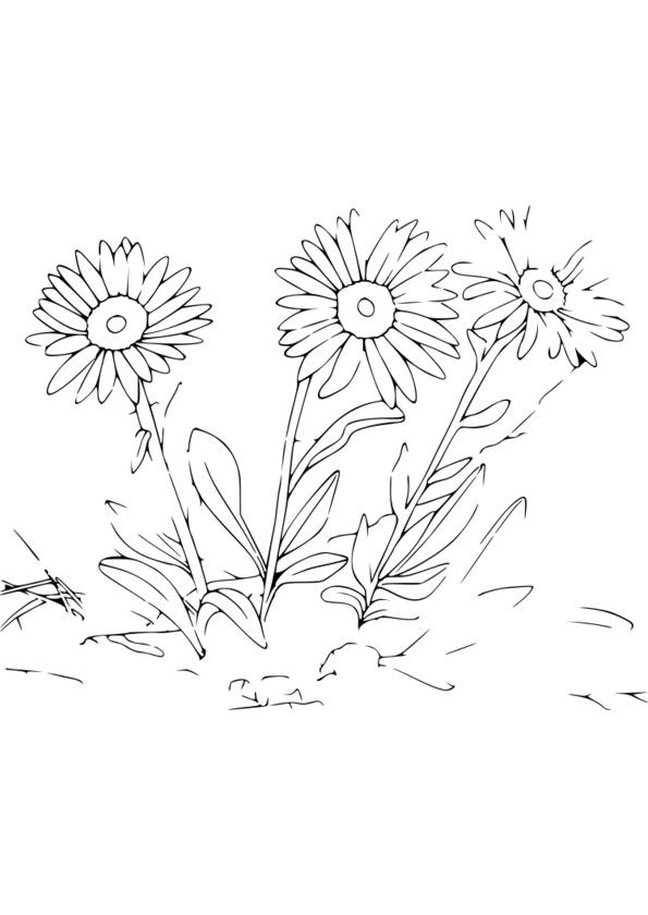 dessin de nature vivante