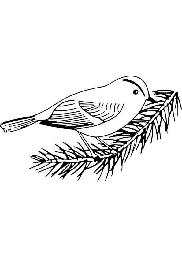 dessin gratuit sur la nature