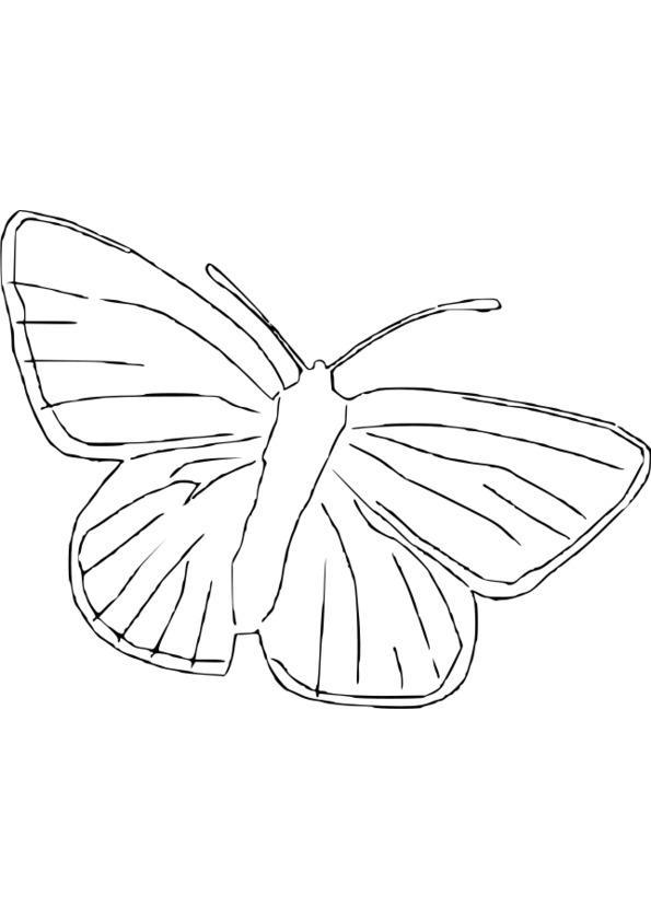dessin nature et animaux