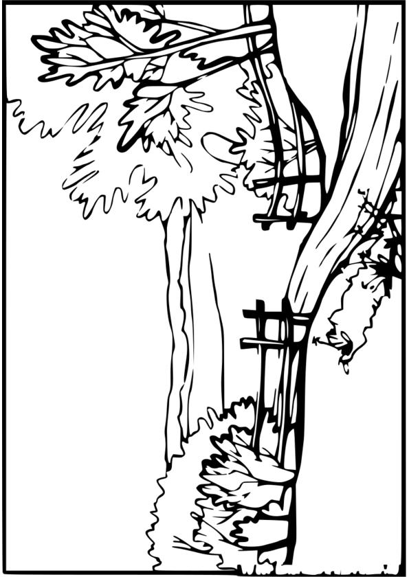 dessiner la nature pdf