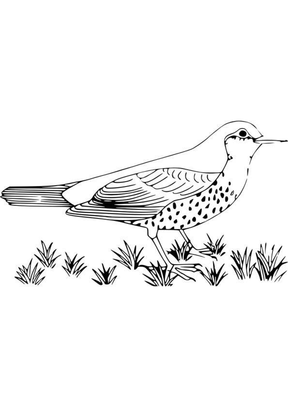131 dessins de coloriage nature imprimer - Coloriage nature a imprimer ...