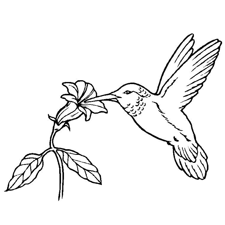 coloriage oiseau de feu