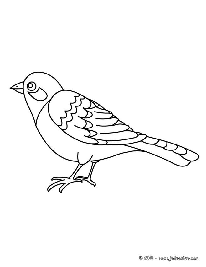 20 dessins de coloriage oiseau en ligne imprimer - Coloriage en ligne superman ...