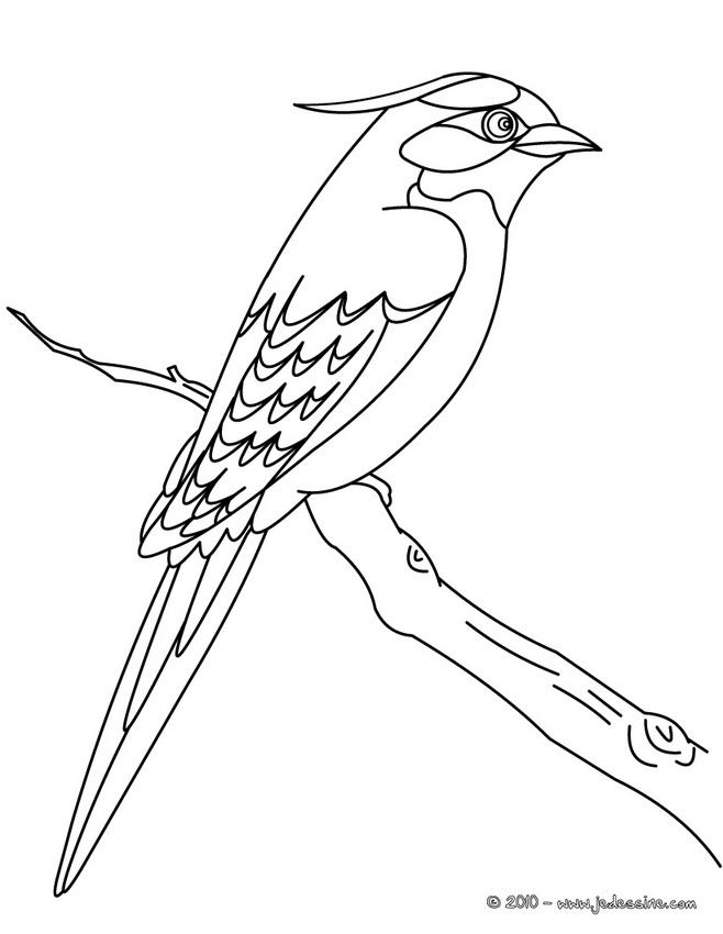 20 dessins de coloriage oiseau gratuit imprimer - Comment dessiner un oiseau facile ...