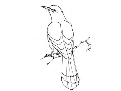 97 dessins de coloriage oiseau mouche imprimer - Oiseau mouche dessin ...