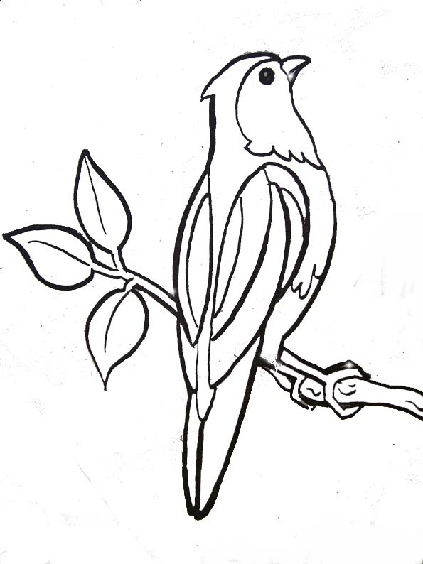 coloriage à dessiner oiseaux