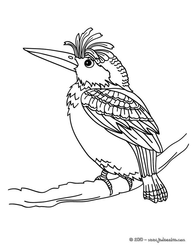 Coloriage fleur oiseau du paradis - Dessin a imprimer oiseau ...
