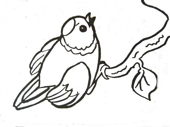 Dessin d 39 oiseaux sur une branche - Dessin d oiseau ...