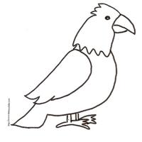 Dessin d 39 oiseaux sur une branche - Comment dessiner un aigle royal ...