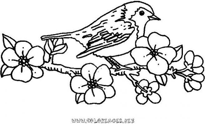 dessin d'un oiseau dans son nid