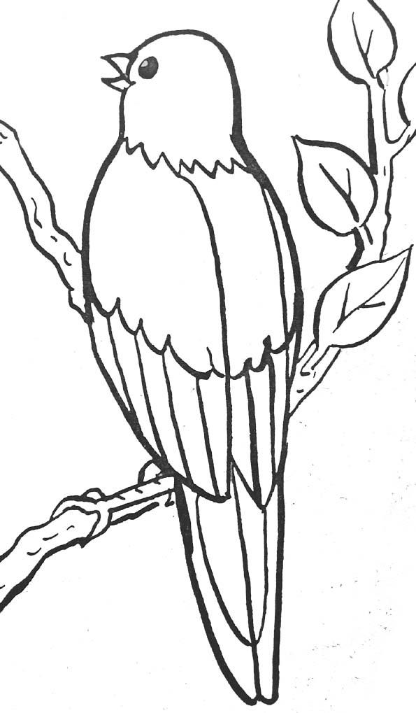 Dessin oiseau sur une branche - Dessin d oiseau ...