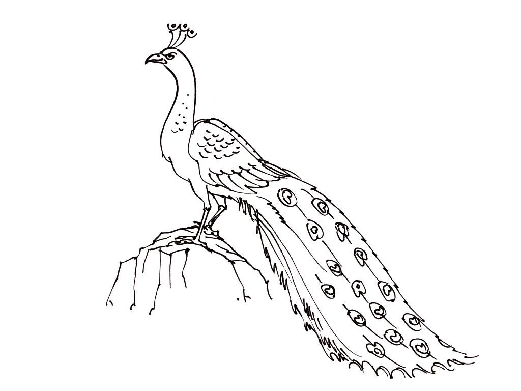 dessin à colorier oiseau de noel