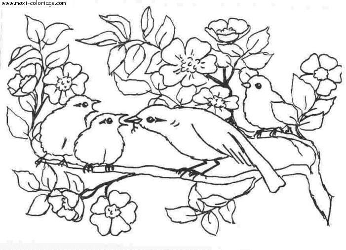 Dessin oiseaux gratuit - Dessin d oiseau a imprimer ...
