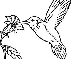 coloriage à dessiner oiseau coucou