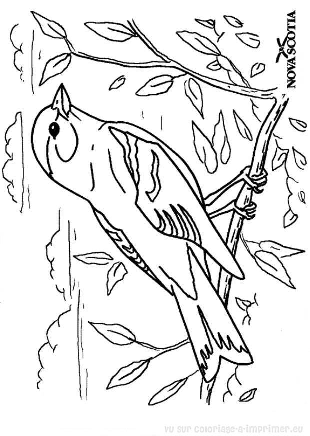 vrac coloriage oiseau