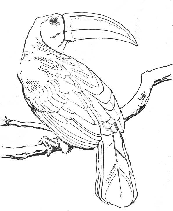dessin à colorier oiseau exotique imprimer