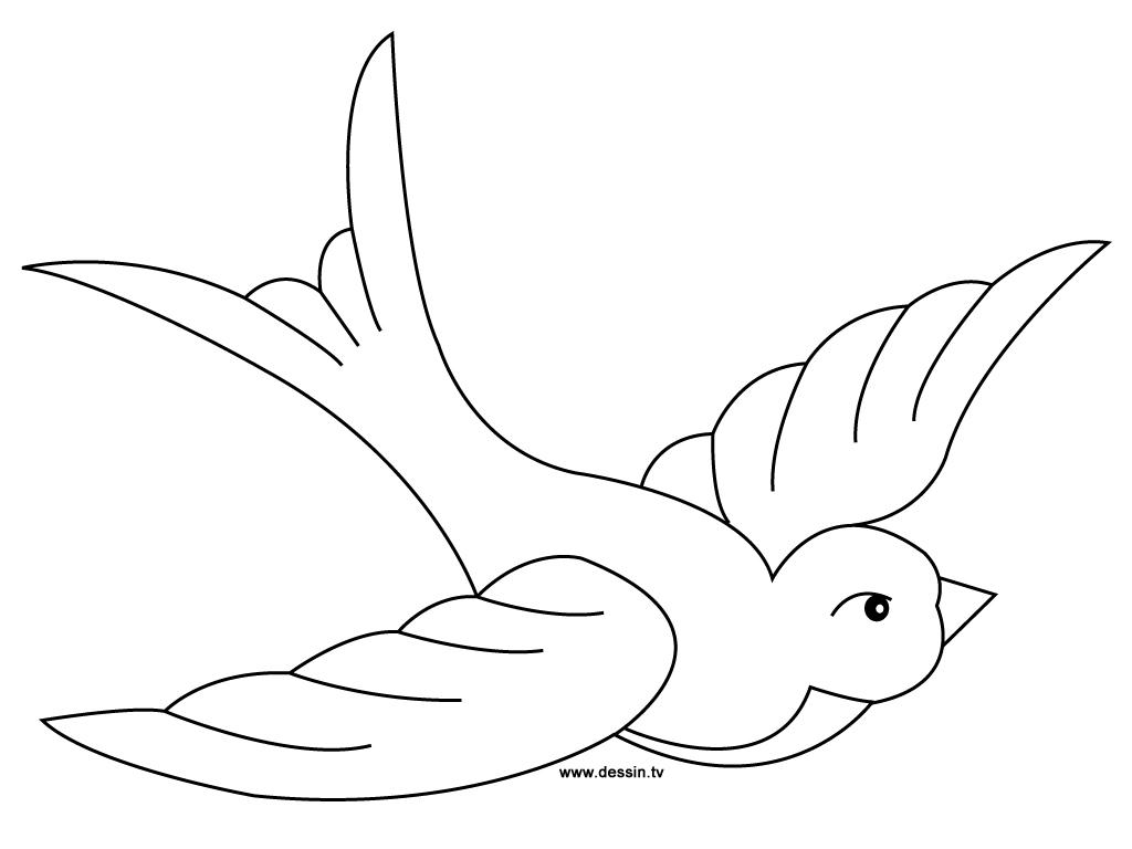 dessin oiseaux exotiques