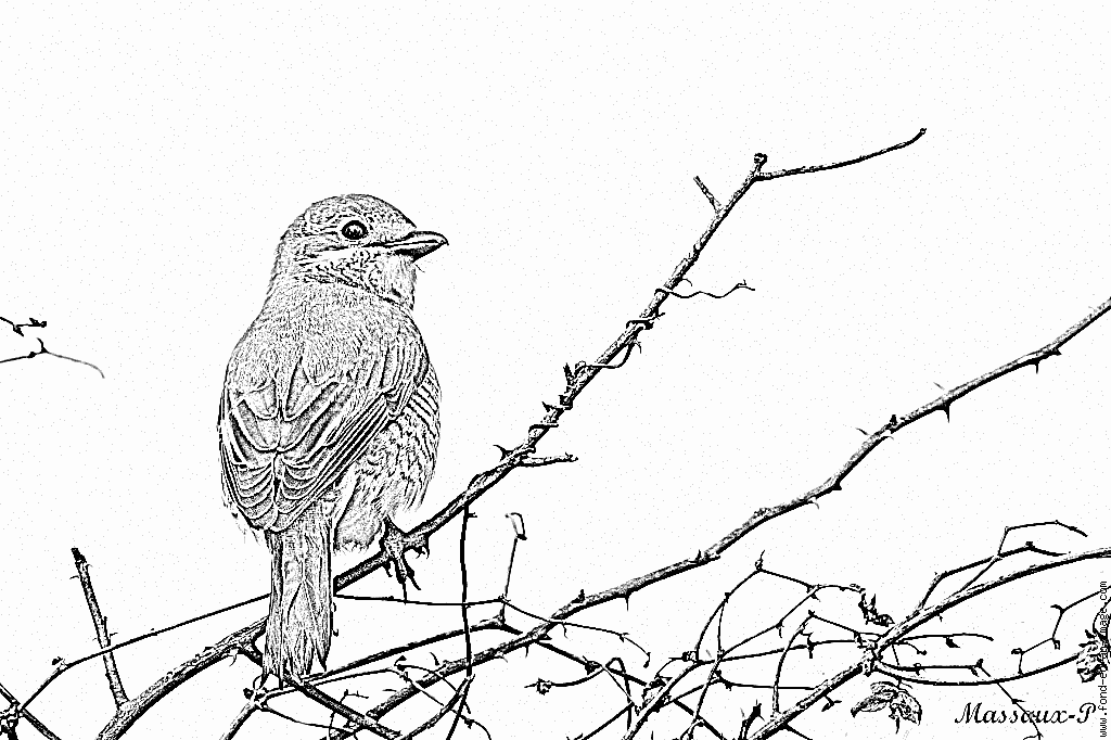 coloriage à dessiner oiseaux migrateurs