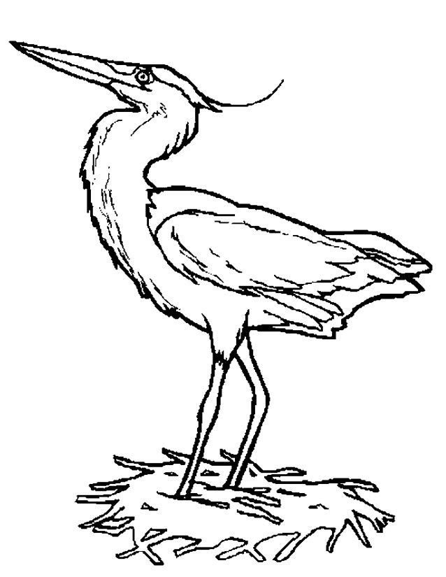 dessin à colorier oiseau hiver
