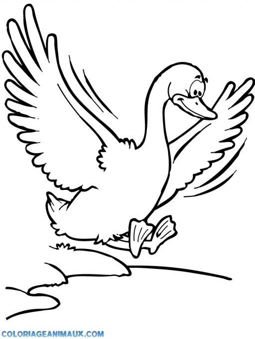 dessin à colorier oiseau à imprimer