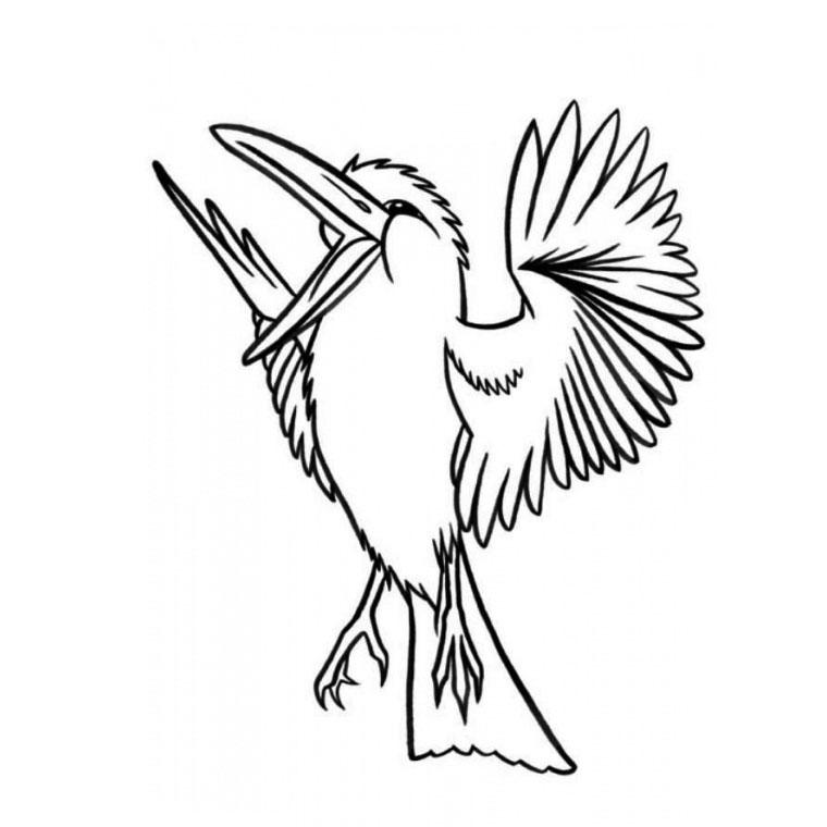 dessin oiseau colibri