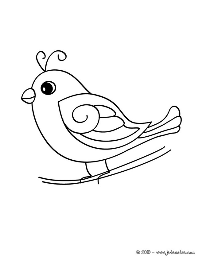 Coloriage dessiner d 39 oiseaux imprimer - Oiseau mouche dessin ...