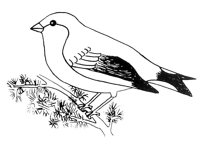 Coloriage ã Dessiner Oiseau Imprimer Gratuit