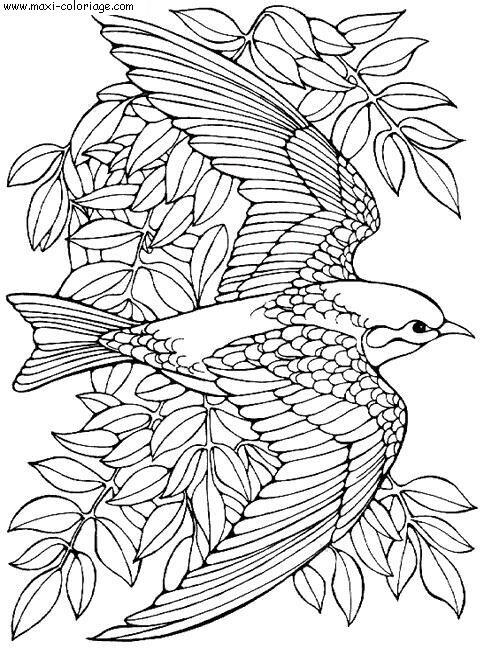 coloriage à dessiner oiseau fantastique