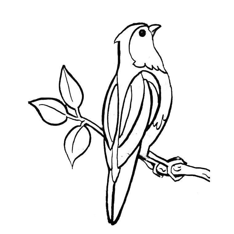 coloriage à dessiner oiseau gratuit