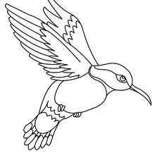 dessin à colorier l'oiseau de pluie