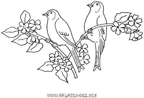 Coloriage d 39 oiseau sur un arbre - Dessin d oiseau a imprimer ...