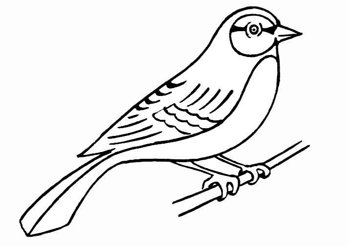 coloriage d'oiseau en cage