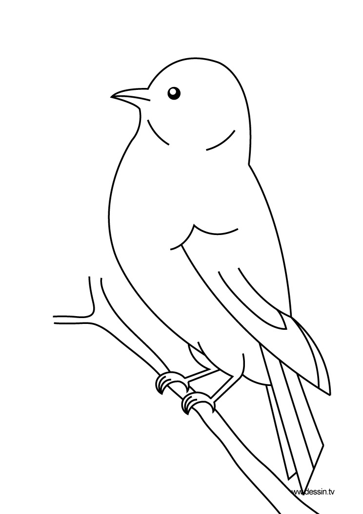dessin oiseau lyre
