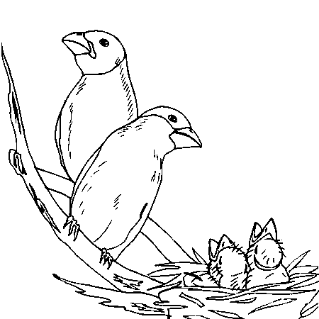 coloriage à dessiner oiseau de noel