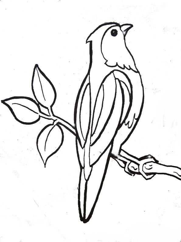 17 Dessins De Coloriage Oiseaux Exotiques A Imprimer