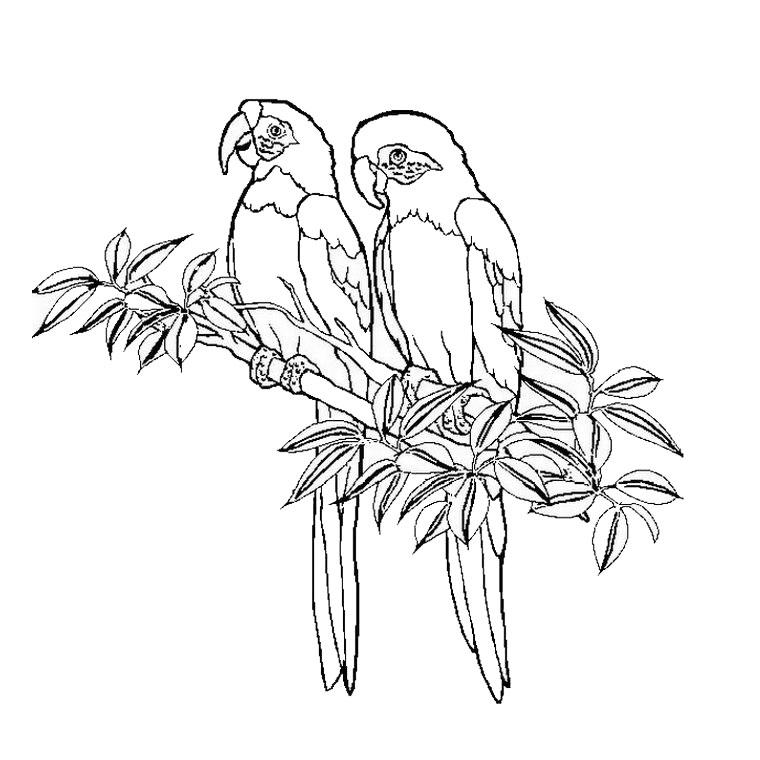 17 dessins de coloriage oiseaux exotiques imprimer - Coloriage a imprimer fleurs exotiques ...