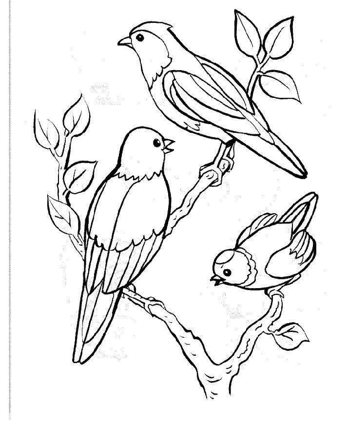 17 dessins de coloriage oiseaux exotiques imprimer - Dessin a imprimer oiseau ...