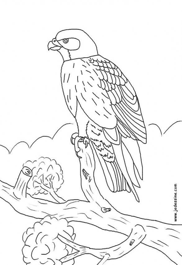20 Dessins De Coloriage Oiseaux Pouyo A Imprimer