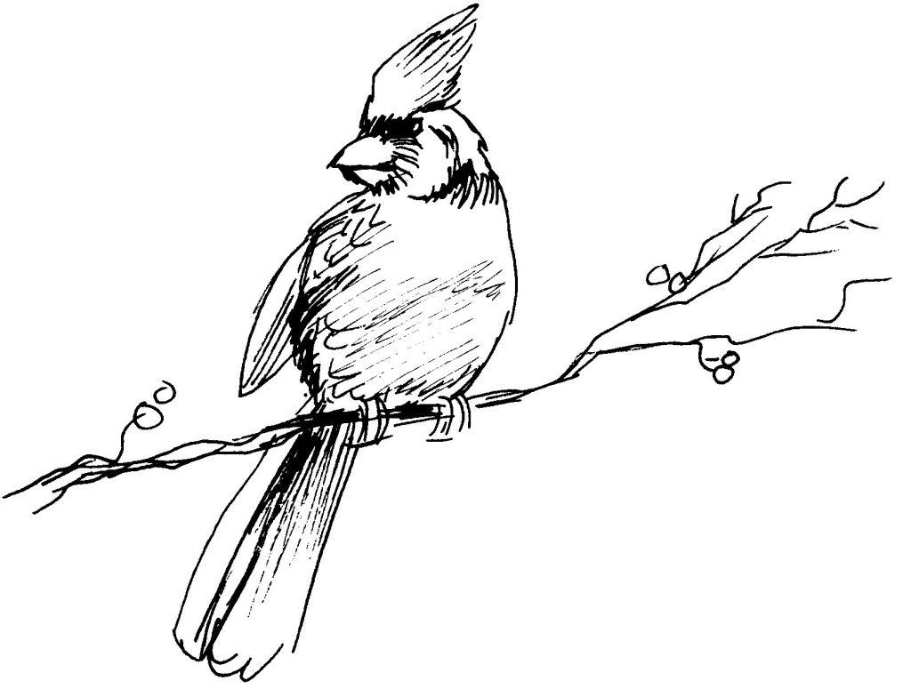 20 dessins de coloriage oiseaux pouyo imprimer - Dessin facile oiseau ...