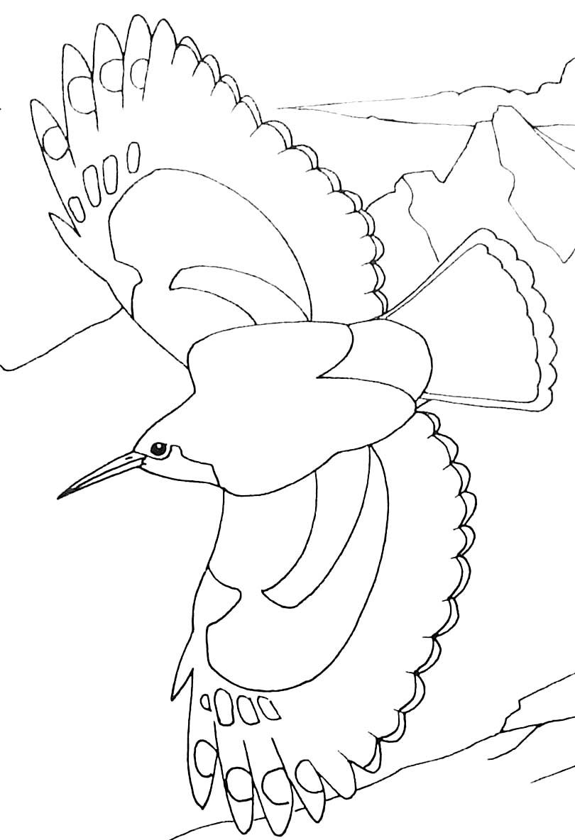 dessin à colorier princesse oiseau