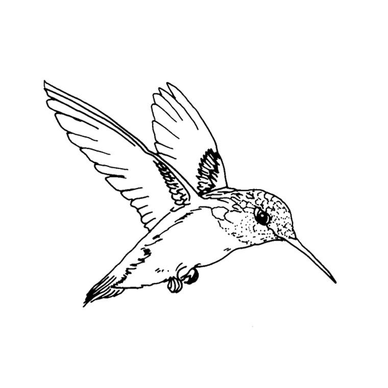 dessin oiseau vole