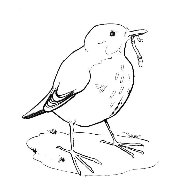 dessin alphabet oiseaux