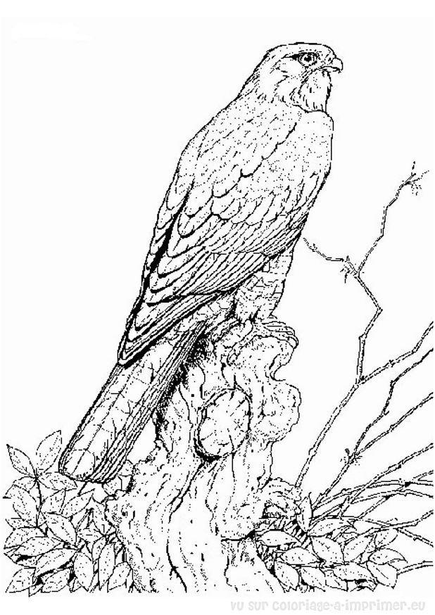 coloriage à dessiner tv oiseau