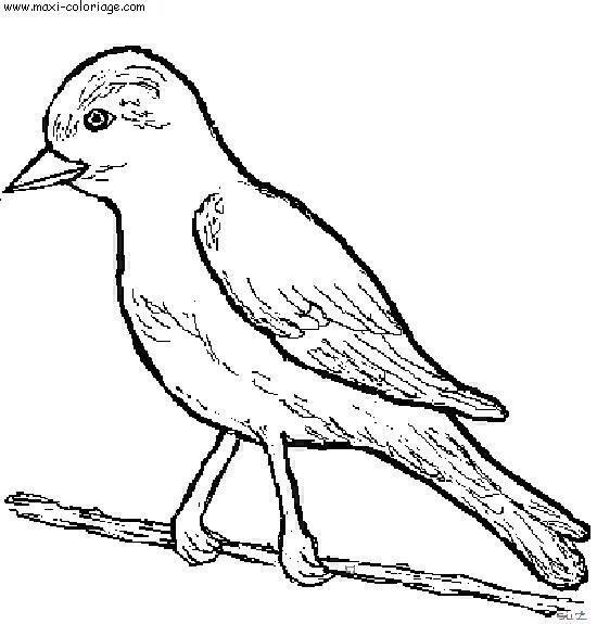 dessin à colorier un oiseau