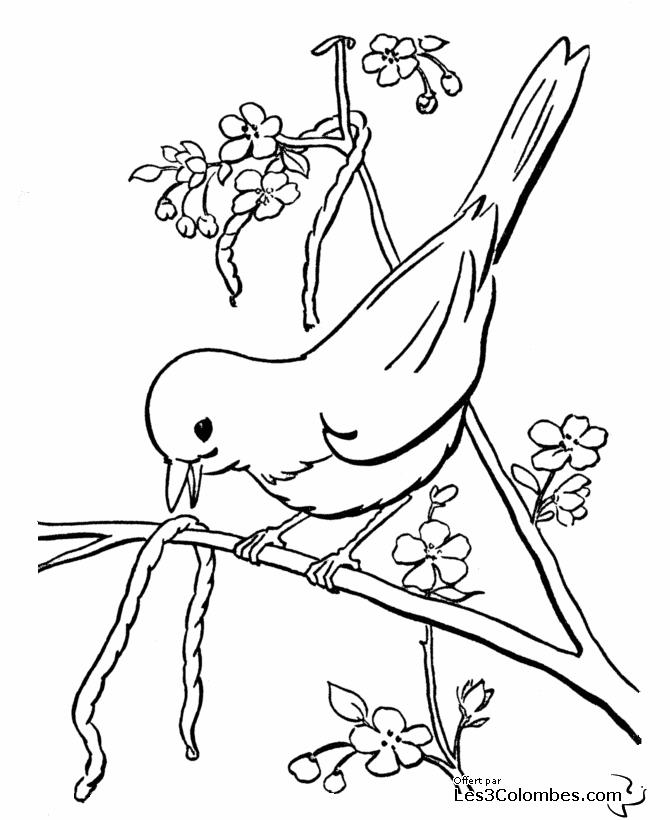 dessin imprimer oiseaux exotiques