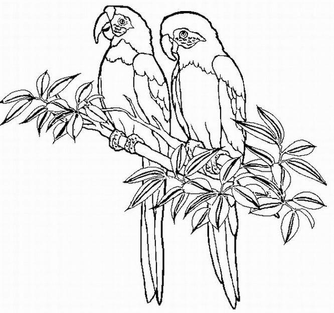 dessin à colorier oiseau sur une branche