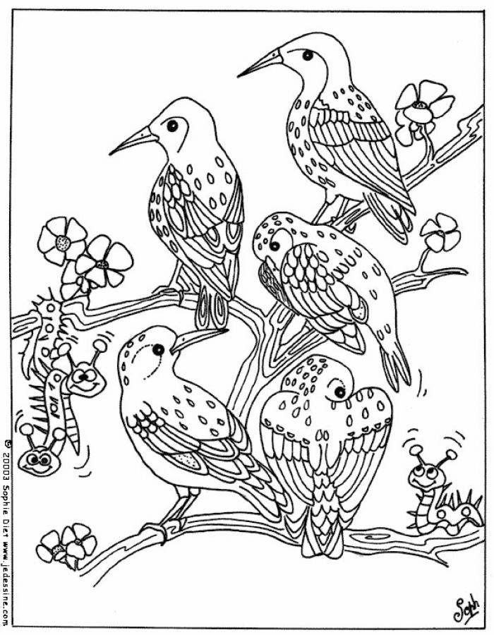 dessin à colorier tv oiseau