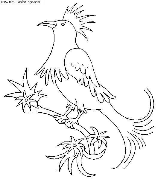dessin oiseaux pouyo